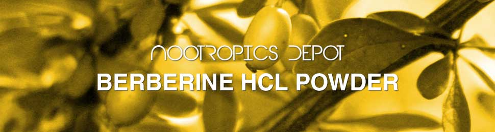 Buy Berberine HCL Powder