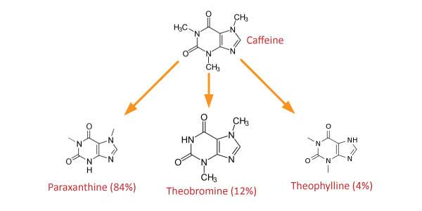How does Caffeine metabolize