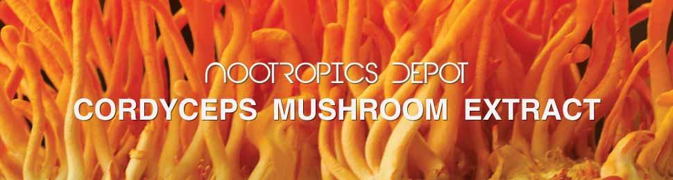 Buy Cordyceps Mushroom