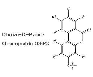DBP Diagram