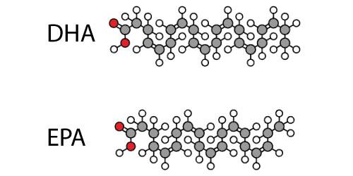 EPA vs. DHA Comparison