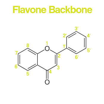 Flavone Backbone