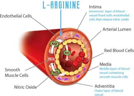 L-Arginine and Nitric Oxide