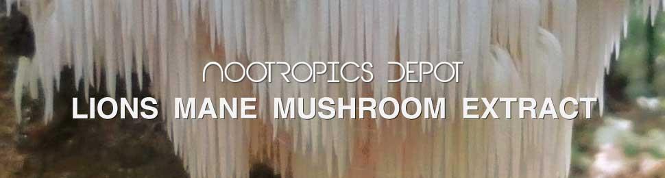 Buy Lion's Mane Mushroom