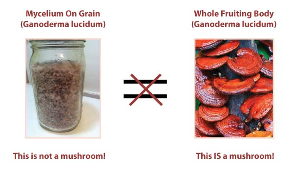 Mycelium on Grain vs. Whole Fruiting Body Mushrooms