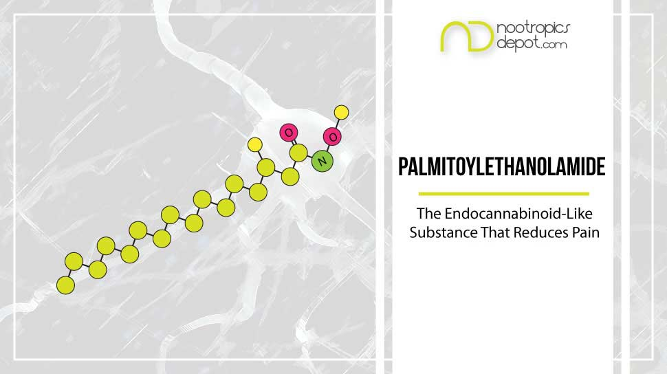 Palmitoylethanolamide and its Pain Management Benefits