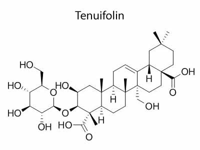 Tenuifolin Structure