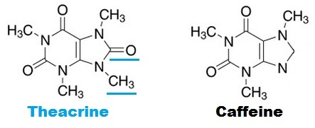 Theacrine vs. Caffeine