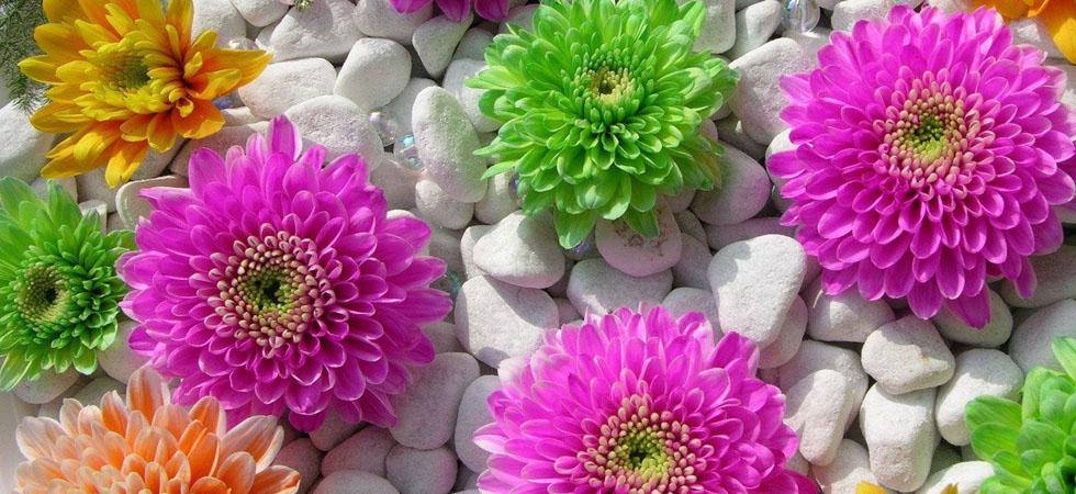 blommor online stockholm
