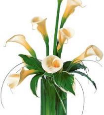 White calla lilies Sweden.