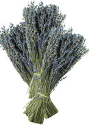 Lavender dried field bunches - 3 Pack