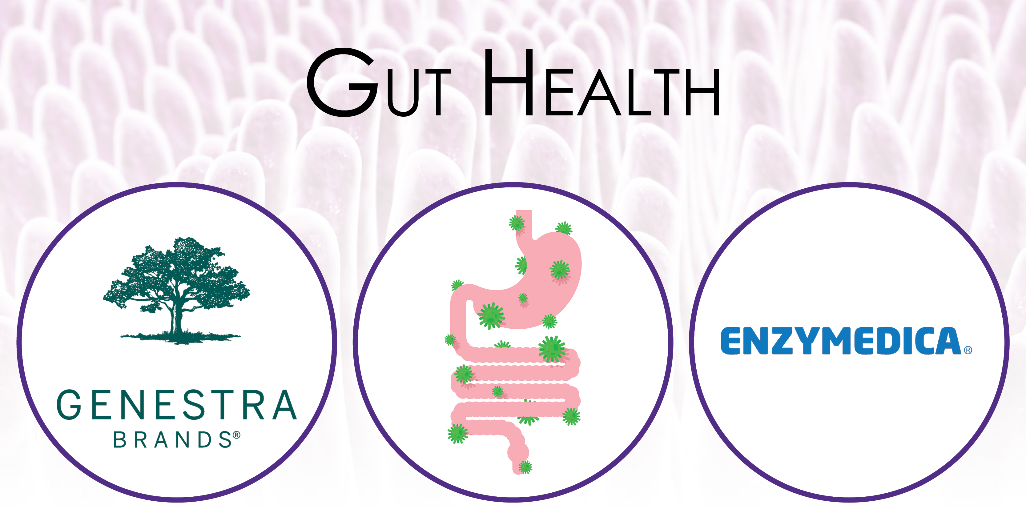 gut-health-category-banner.png