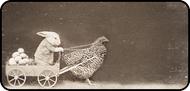 Chicken Chariot