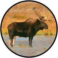 Big Moose BR