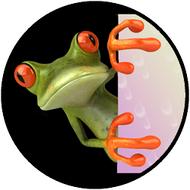 Peek a Boo Frog BR