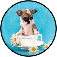 Teacup Pup BR
