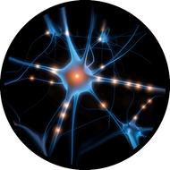 Neuron BR