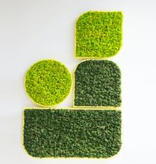 BuzziSpace BuzziMood Moss Wall Panels