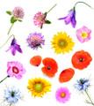 Exaltation of Flowers
