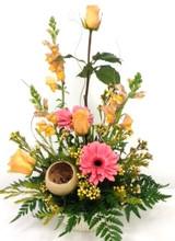 gerber daisy and roses abilene