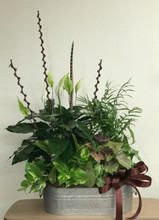 Peace lilly, Nephetitus, Palm and Ivy Plant in oblong galvanized container. with decorative accents.