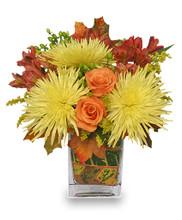 abilene fall flowers