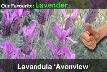 top20-lavenderavonview.jpg