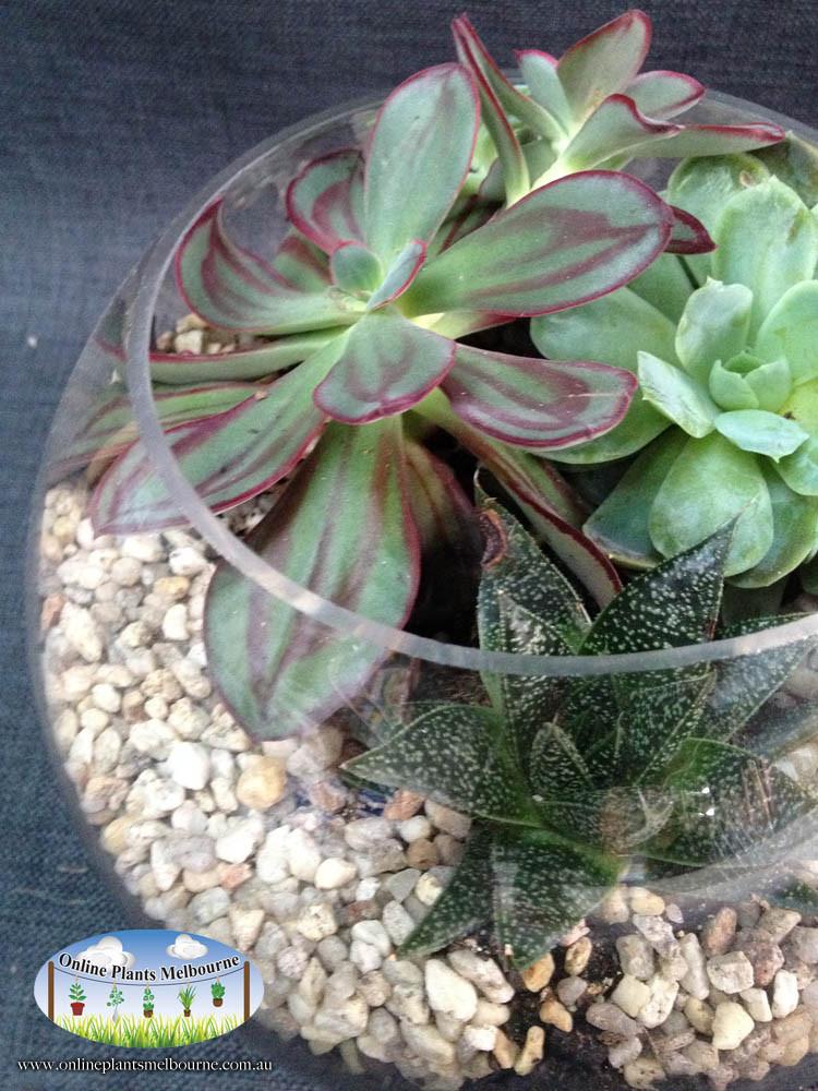 Online Plants Melbourne Terrariums