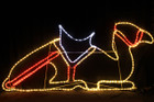 150CM Wide LED Nativity Resting Camel Christmas Motif Rope Lights