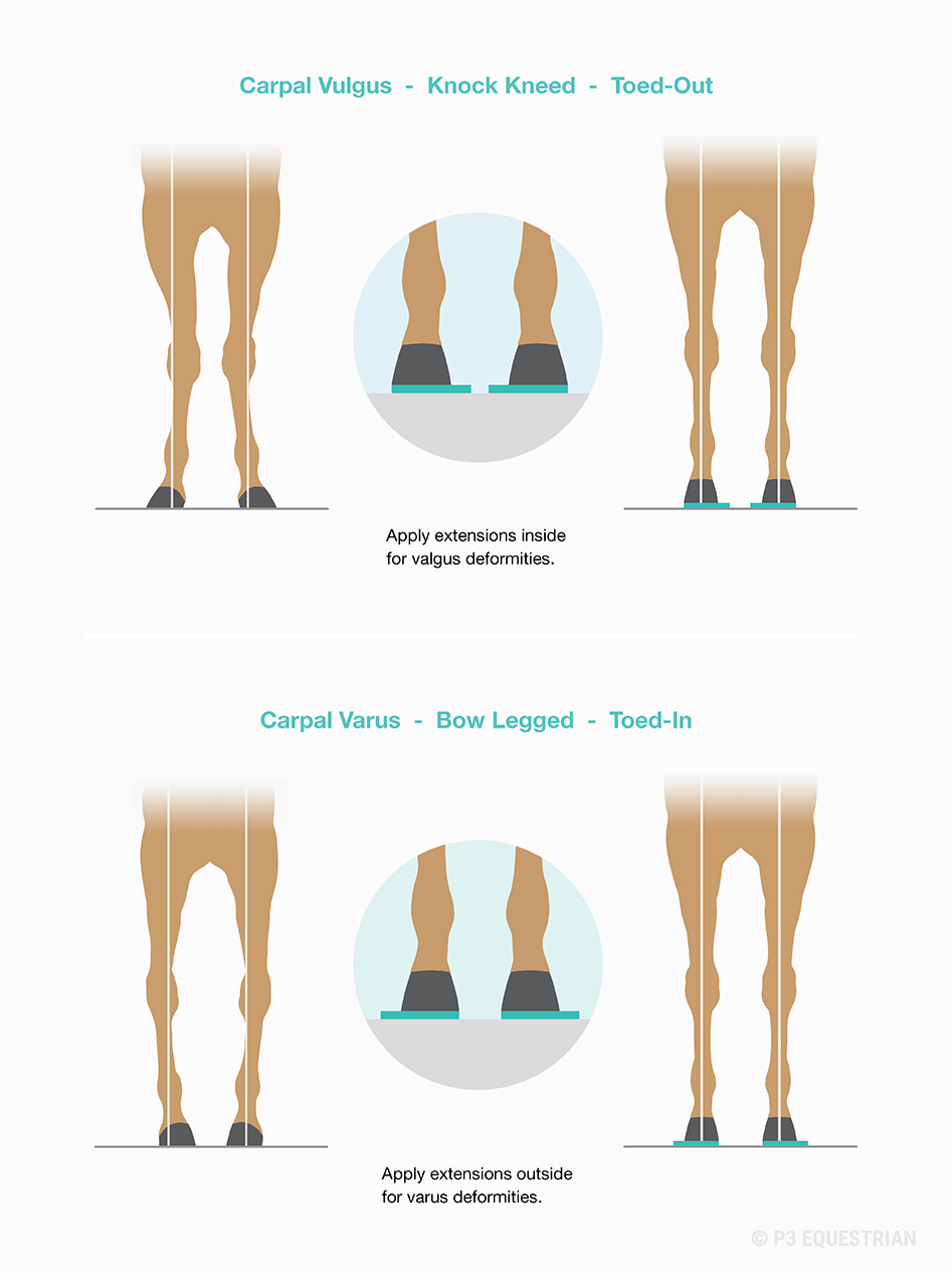 20181026-foal-correction-diagram-inside-outside-extensions-copyright-p3-equestrian.jpg