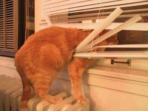 Pet Friendly Window Treatments Window Blind Outlet