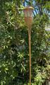 2-Pk Garden Bamboo Tiki Torch Solar Landscape Lights
