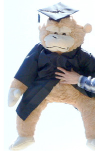 Giant Graduation Stuffed Monkey 42 Inches Wears Removable Black Graduation Cap and Gown