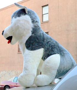 Oversized Stuffed Husky Dog - More Than 3 and 1/2 Feet Tall and 3 Feet Wide and 3 Feet Deep - Big Plush Animal