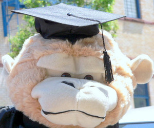 Add a GRADUATION CAP We will attach the cap to your stuffed animal's head - Easily removable without damaging the animal