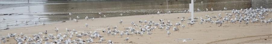 10-seagulls.jpg