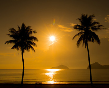 Two Palm Trees Sunset Tropical Beach 48x61